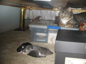 Carrie Guards Her Kittens
