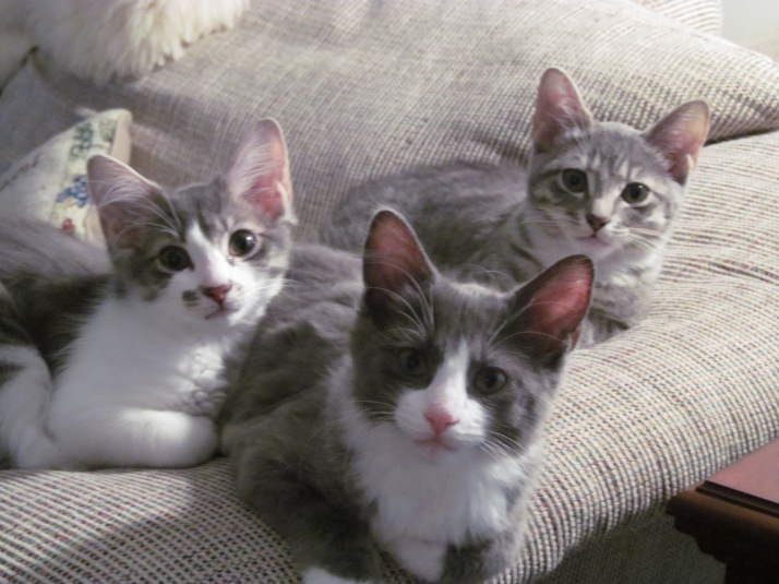 Lovey, Missy, and Lily at Five Months Old