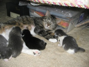 Carrie Nursing Her Babies