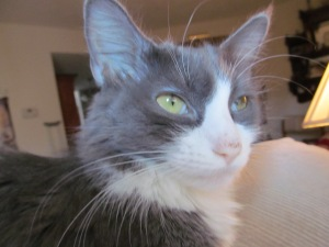 Missy one week before her death from FeLV+.  You can tell how sickly she is by the white in the corners of her eyes in this photo.  She also has lost all her pick color on her nose and she has lost a lot of weight.  Her eyes have lost their brilliance, too.