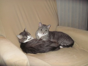 Lovey and Lily had a very special relationship as you can see.