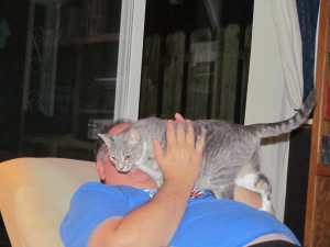Lily loved to jump up on her Daddy's chest to be petted and adored